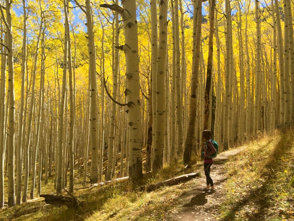 Flagstaff inner basin trail aspen forest fall
