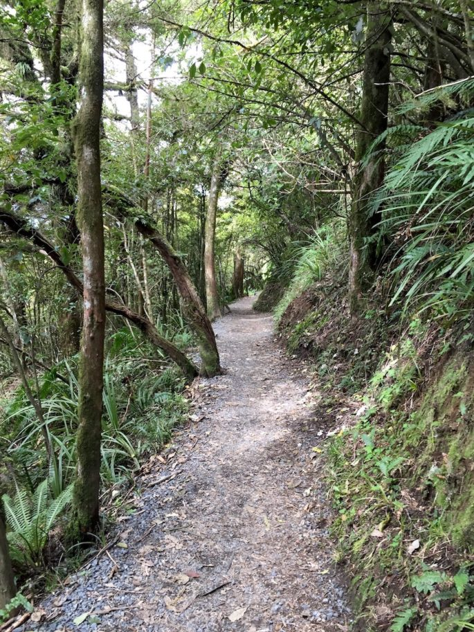 Tongariro Alpine Crossing bush