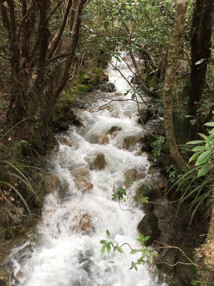 Tongariro Alpine Crossing bush stream