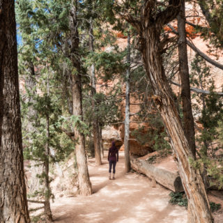 Things You Might Not Expect at Bryce Canyon National Park