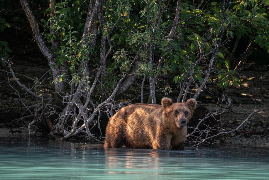 Lake Clark National Park bear viewing tour
